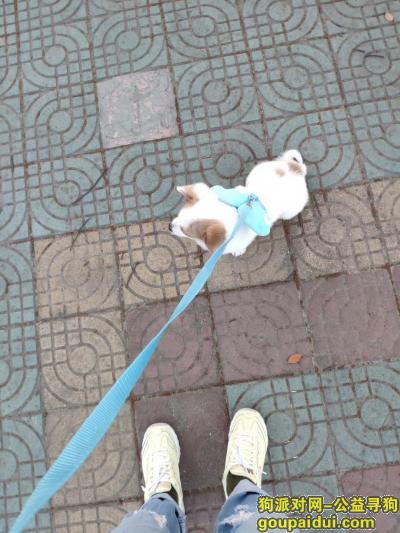 ,潜江五七广场寻白色小狗,它是一只非常可爱的宠物狗狗,希望它早日回家,不要变成流浪狗。