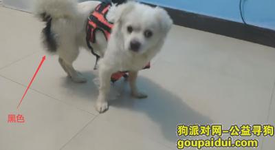 义乌丢狗,2020年4月份狗狗丢失,它是一只非常可爱的宠物狗狗,希望它早日回家,不要变成流浪狗。