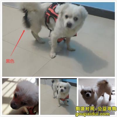 义乌寻狗,浙江义乌丢失狗狗一只,它是一只非常可爱的宠物狗狗,希望它早日回家,不要变成流浪狗。