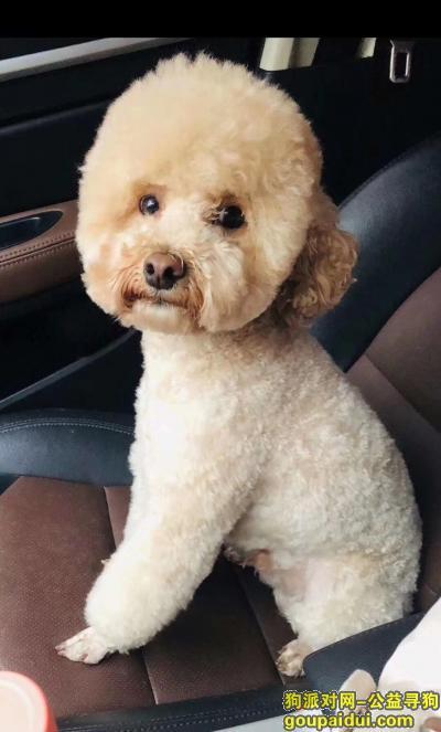 【西安找狗】,狗狗对我真的很重要  有见到或收养的请联系我  有重谢,它是一只非常可爱的宠物狗狗,希望它早日回家,不要变成流浪狗。