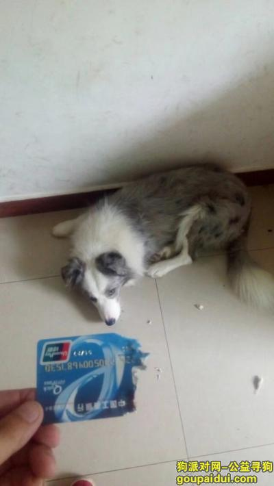 德阳寻狗网,中江急寻狗狗回家,希望好心人看到联系我,它是一只非常可爱的宠物狗狗,希望它早日回家,不要变成流浪狗。