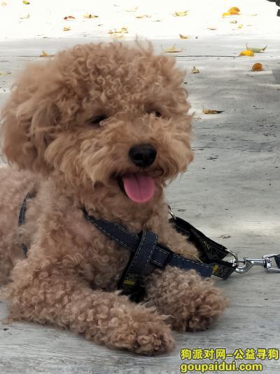 揭阳找狗,如果看的这只狗狗,你就它依依会答应,如果捡到了,麻烦还给我好不好,求求你们了QQ3486311565,它是一只非常可爱的宠物狗狗,希望它早日回家,不要变成流浪狗。