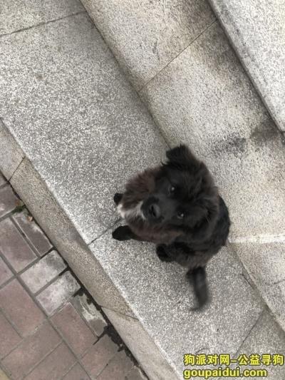 淮安捡到狗,清江浦区淮海西路附近捡到一只小狗,它是一只非常可爱的宠物狗狗,希望它早日回家,不要变成流浪狗。