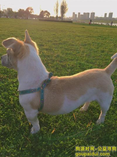 合肥寻狗,狗狗5月3日走丢求好心人帮忙寻找,它是一只非常可爱的宠物狗狗,希望它早日回家,不要变成流浪狗。