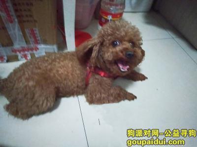 齐齐哈尔寻狗启示,好心人看到 请帮忙留意一下 拜托拜托,它是一只非常可爱的宠物狗狗,希望它早日回家,不要变成流浪狗。