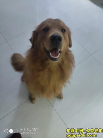 ,寻找家里的狗狗,在今天上午不见得。,它是一只非常可爱的宠物狗狗,希望它早日回家,不要变成流浪狗。