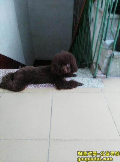 玉林寻狗启示,找狗狗酬谢2000元,它是一只非常可爱的宠物狗狗,希望它早日回家,不要变成流浪狗。