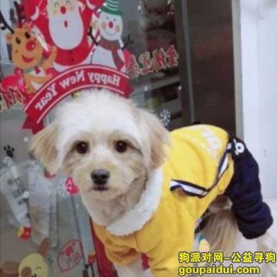 济南寻狗启示,男狗狗,橘黄脖套绳子,没穿衣服,它是一只非常可爱的宠物狗狗,希望它早日回家,不要变成流浪狗。