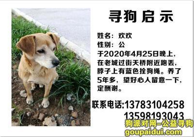 洛阳寻狗,2020年4月25日晚丢失爱犬,它是一只非常可爱的宠物狗狗,希望它早日回家,不要变成流浪狗。