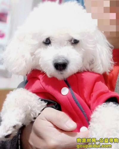 ,小狗比熊5月2日晚资阳服务区丢失。,它是一只非常可爱的宠物狗狗,希望它早日回家,不要变成流浪狗。