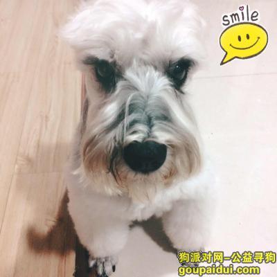 昆明寻狗启示,求帮助,感谢各位爱心人士!,它是一只非常可爱的宠物狗狗,希望它早日回家,不要变成流浪狗。