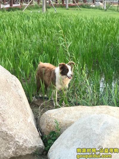 济南捡到狗,遛弯看到一只流浪狗不跟人走应该还在那,它是一只非常可爱的宠物狗狗,希望它早日回家,不要变成流浪狗。
