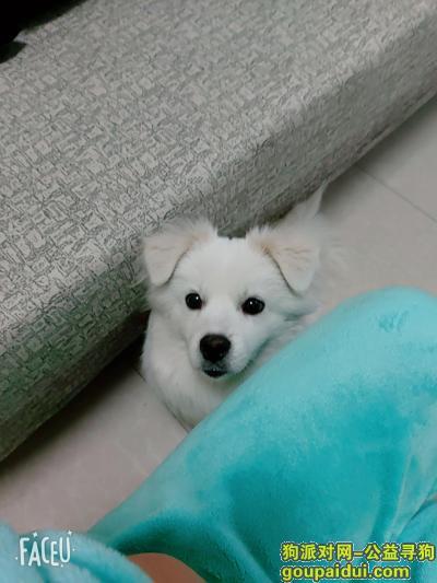 宜宾找狗,请拾到爱犬的好心人 归还必有酬金,它是一只非常可爱的宠物狗狗,希望它早日回家,不要变成流浪狗。