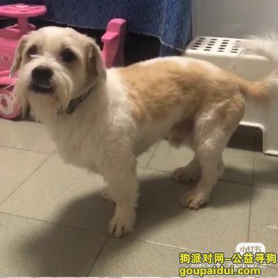北京找狗,爱犬在北京朝阳区延静西里附近走失!,它是一只非常可爱的宠物狗狗,希望它早日回家,不要变成流浪狗。