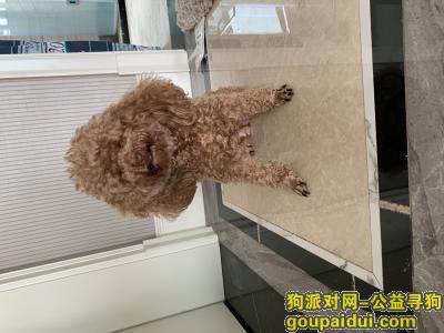 曲靖寻狗网,渝昆高速 服务区丢失,它是一只非常可爱的宠物狗狗,希望它早日回家,不要变成流浪狗。