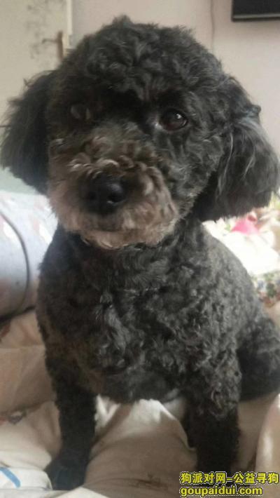 菏泽找狗,山东菏泽寻找狗狗启示,它是一只非常可爱的宠物狗狗,希望它早日回家,不要变成流浪狗。