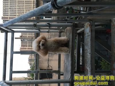 徐州找狗,寻狗启示  求好心人看到或捡到帮帮忙,它是一只非常可爱的宠物狗狗,希望它早日回家,不要变成流浪狗。