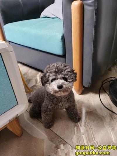 乐山找狗,万元寻狗,陪伴主人六年,已是家庭成员之一,主人已急疯,它是一只非常可爱的宠物狗狗,希望它早日回家,不要变成流浪狗。