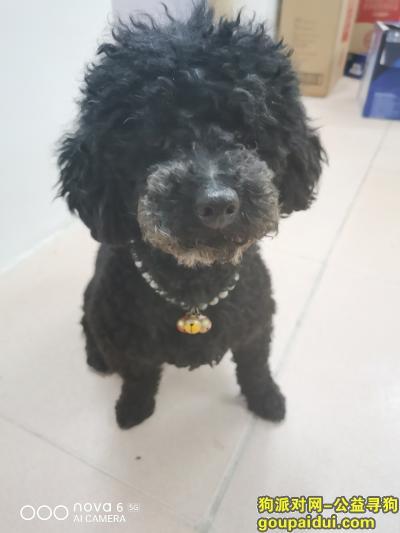 ,柳南区永前路林溪小区,它是一只非常可爱的宠物狗狗,希望它早日回家,不要变成流浪狗。