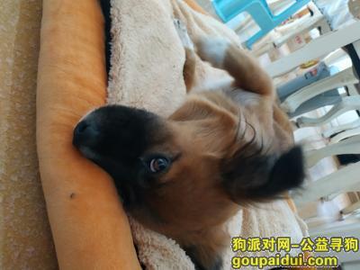 无锡捡到狗,捡到一只土狗,家养的剪过指甲只吃狗粮,它是一只非常可爱的宠物狗狗,希望它早日回家,不要变成流浪狗。