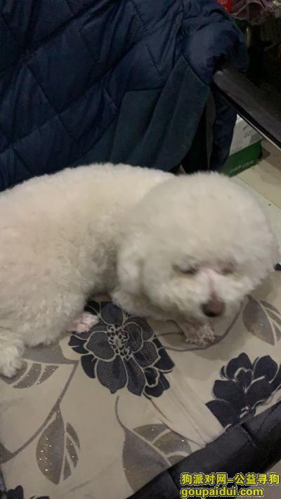 【宿迁找狗】,寻爱犬5月17日下午5点50走失,它是一只非常可爱的宠物狗狗,希望它早日回家,不要变成流浪狗。