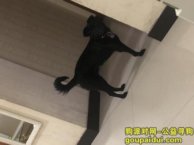 义乌寻狗启示,童店路与贝村路交叉口附近,谁看到这只狗狗吗?纯黑有一只脚瘸了大概十五六斤,希望好心人看到联系我18458071985有重谢,它是一只非常可爱的宠物狗狗,希望它早日回家,不要变成流浪狗。