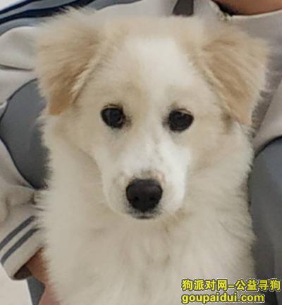 漳州寻狗网,漳州市芗城区解放路寻狗,它是一只非常可爱的宠物狗狗,希望它早日回家,不要变成流浪狗。