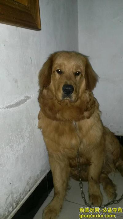 巢湖寻狗启示,麻烦大家帮帮忙找找,谢谢,它是一只非常可爱的宠物狗狗,希望它早日回家,不要变成流浪狗。