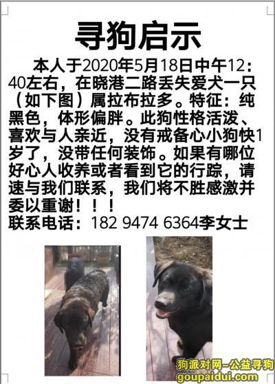 青岛找狗,市北区晓港二路走丢黑色拉布拉多一只麻烦大家帮忙找找,必有酬谢,谢谢,它是一只非常可爱的宠物狗狗,希望它早日回家,不要变成流浪狗。
