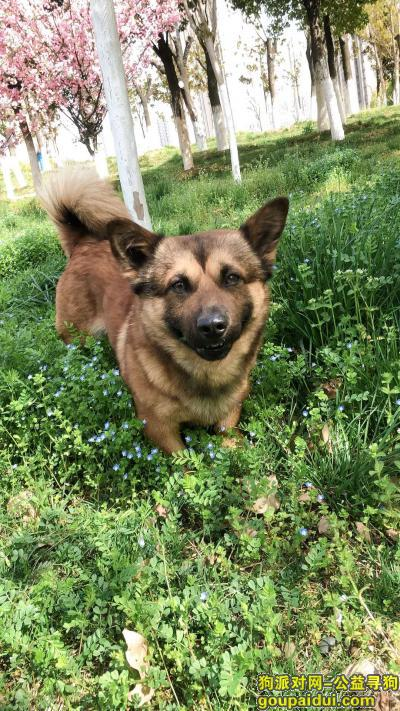 襄阳找狗,寻找爱犬旺旺,提供线索的好心人定当面重谢!,它是一只非常可爱的宠物狗狗,希望它早日回家,不要变成流浪狗。