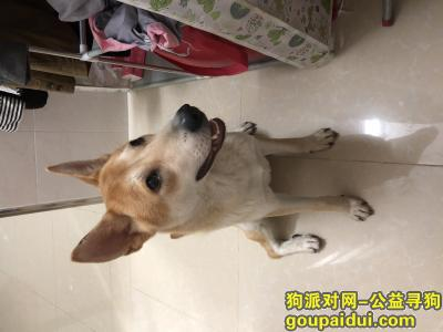 中山找狗,寻狗启示 2020年5月18日上午丢失狗狗,它是一只非常可爱的宠物狗狗,希望它早日回家,不要变成流浪狗。
