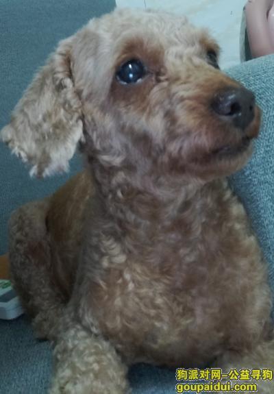 【深圳捡到狗】,本人在横岗志健广场捡到这条小狗,它是一只非常可爱的宠物狗狗,希望它早日回家,不要变成流浪狗。