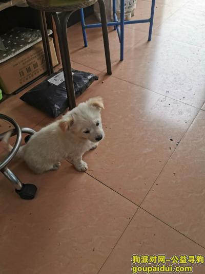 金华寻狗启示,请好心人看到我家狗狗,联系我们,重金酬谢,它是一只非常可爱的宠物狗狗,希望它早日回家,不要变成流浪狗。