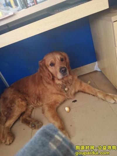 【柳州找狗】,重金寻狗大家帮忙询一下,它是一只非常可爱的宠物狗狗,希望它早日回家,不要变成流浪狗。