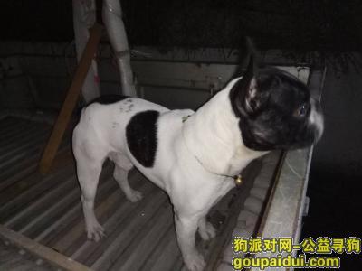 【济南找狗】,济南市历下区历山路胸科医院附近法国斗牛黑白,它是一只非常可爱的宠物狗狗,希望它早日回家,不要变成流浪狗。