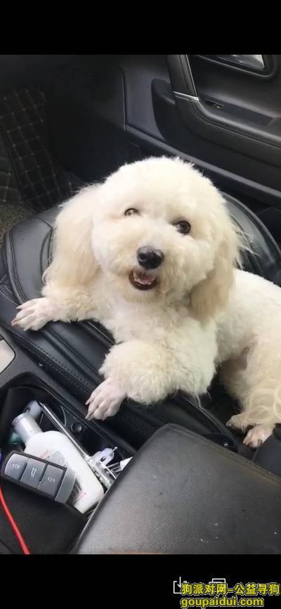 金华找狗,比熊妹妹走丢,望看到的人能联系我们,它是一只非常可爱的宠物狗狗,希望它早日回家,不要变成流浪狗。