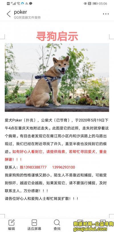 【重庆找狗】,重庆市渝中区重庆天地酬谢一万元寻找柴犬,它是一只非常可爱的宠物狗狗,希望它早日回家,不要变成流浪狗。
