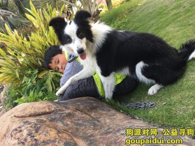 位于晋江龙湖丢失,非常着急找回,哪位见到的麻烦联系我。十分感谢!,它是一只非常可爱的宠物狗狗,希望它早日回家,不要变成流浪狗。