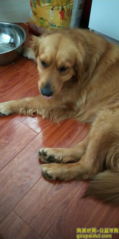巢湖寻狗主人,体育场,金毛一只,会做电动车,它是一只非常可爱的宠物狗狗,希望它早日回家,不要变成流浪狗。
