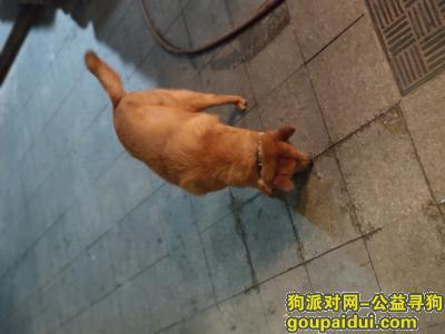 ,。。。,它是一只非常可爱的宠物狗狗,希望它早日回家,不要变成流浪狗。