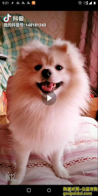 ,丢失爱犬,心急如焚,以泪洗面,忘遇到个好人家,它是一只非常可爱的宠物狗狗,希望它早日回家,不要变成流浪狗。