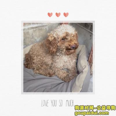 邯郸寻狗网,泰迪狗在武安邮局对面丢失,它是一只非常可爱的宠物狗狗,希望它早日回家,不要变成流浪狗。