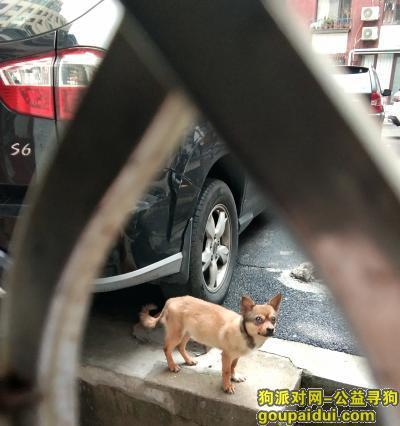 大连找狗主人,大连市八一路有没有丢狗的?急!!!,它是一只非常可爱的宠物狗狗,希望它早日回家,不要变成流浪狗。