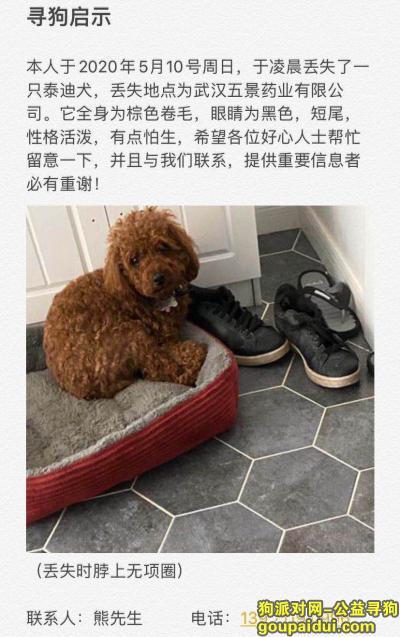 武汉寻狗网,朋友狗狗丢了已经12天了,它是一只非常可爱的宠物狗狗,希望它早日回家,不要变成流浪狗。