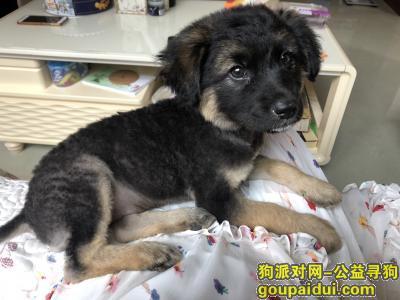【上海捡到狗】,上海松江泗泾捡到一只幼犬,应该是主人刚给它修过毛,它是一只非常可爱的宠物狗狗,希望它早日回家,不要变成流浪狗。