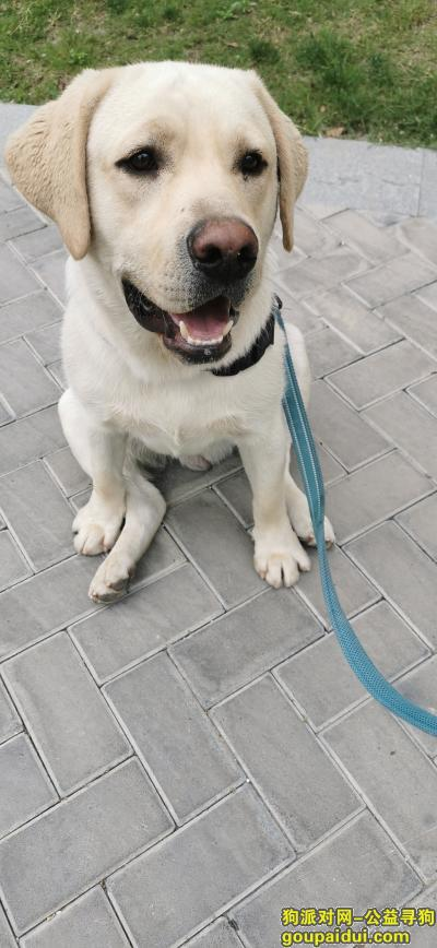 阜阳寻狗,我家狗狗的回家之旅。,它是一只非常可爱的宠物狗狗,希望它早日回家,不要变成流浪狗。