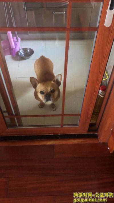 """武汉寻狗启示,武汉硚口长顺路走丢一只棕色法斗串串名叫""""豆豆"""",它是一只非常可爱的宠物狗狗,希望它早日回家,不要变成流浪狗。"""