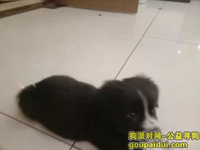 湘潭寻狗,一只小狗狗丢了,人都快抑郁了,求求各位好心人了,谢谢各位,看到了联系一下我,它是一只非常可爱的宠物狗狗,希望它早日回家,不要变成流浪狗。