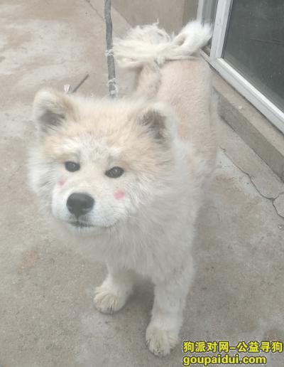 沈阳寻狗启示,寻找狗狗,在棋盘山附近走失,走失时还带着项圈,它是一只非常可爱的宠物狗狗,希望它早日回家,不要变成流浪狗。