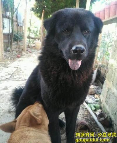 金华寻狗网,电话号码1506758685,它是一只非常可爱的宠物狗狗,希望它早日回家,不要变成流浪狗。